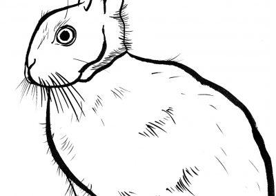 Rabbit056