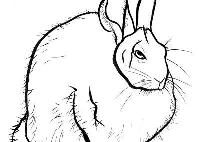 Rabbit057