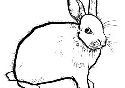 Rabbit058