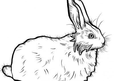 Rabbit059