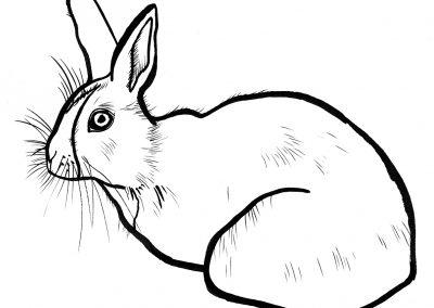 Rabbit060