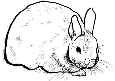 Rabbit061