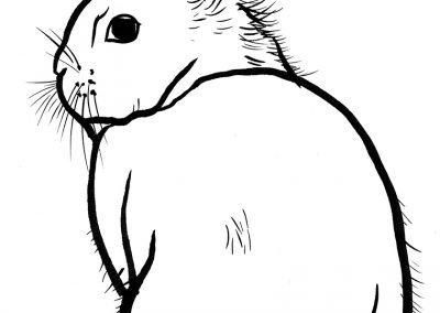 Rabbit062
