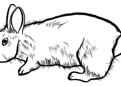 Rabbit063