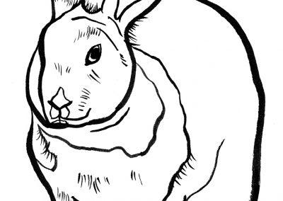 Rabbit064
