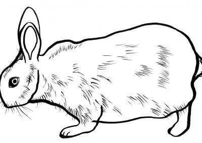 Rabbit065