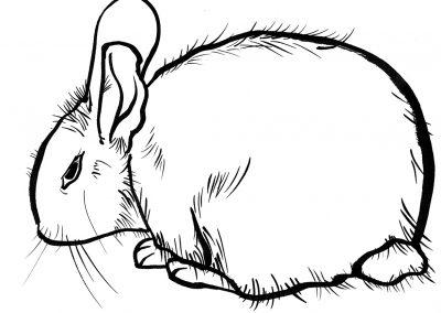 Rabbit066