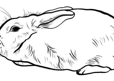 Rabbit067