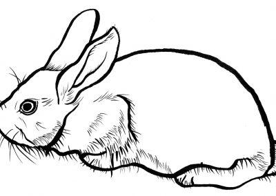 Rabbit069