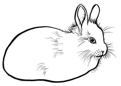 Rabbit070