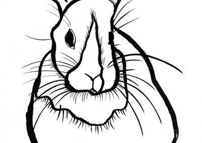 Rabbit071