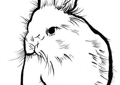 Rabbit072