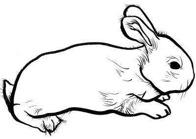 Rabbit073