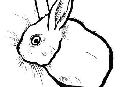Rabbit075