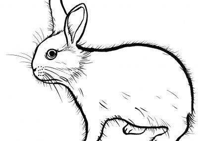 Rabbit076