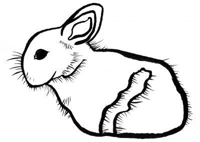 Rabbit077
