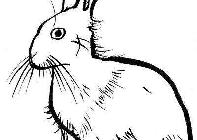 Rabbit078