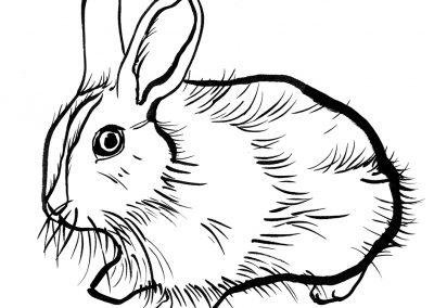 Rabbit079