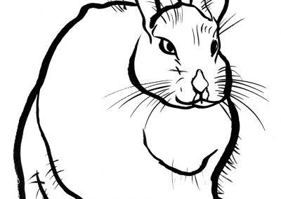Rabbit080