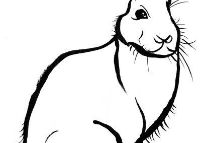 Rabbit082