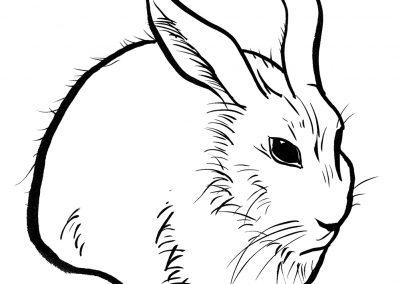 Rabbit083