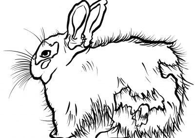 Rabbit086