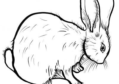 Rabbit087