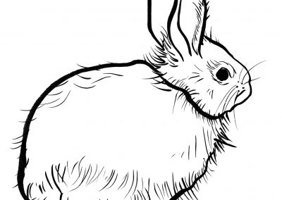 Rabbit088