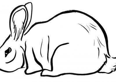 Rabbit090