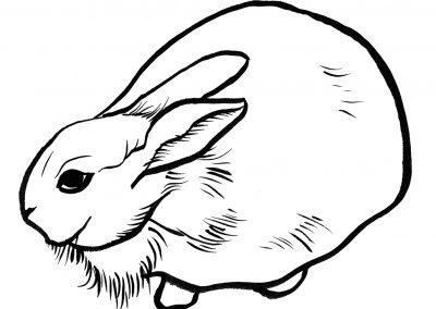 Rabbit091