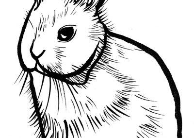 Rabbit092