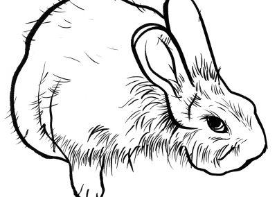 Rabbit093