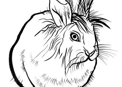 Rabbit094