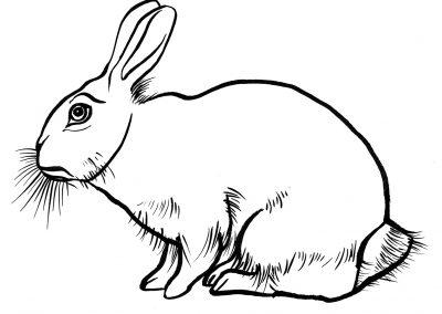 Rabbit096