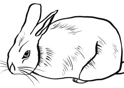 Rabbit097