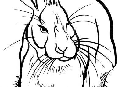 Rabbit098
