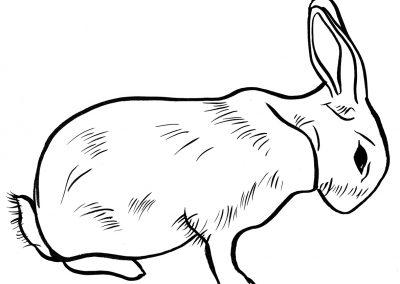 Rabbit099