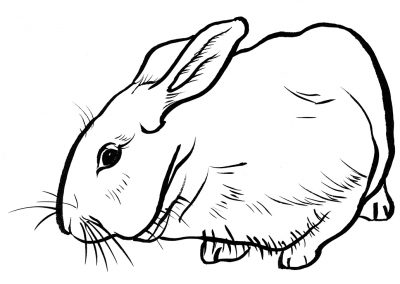 Rabbit100
