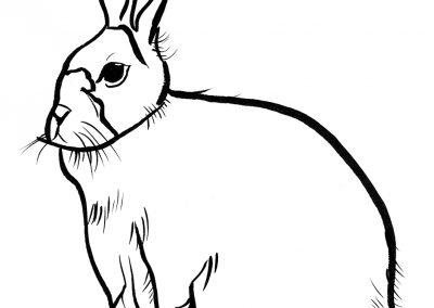 Rabbit101