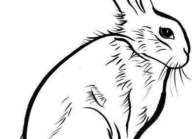 Rabbit102