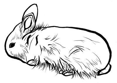 Rabbit105