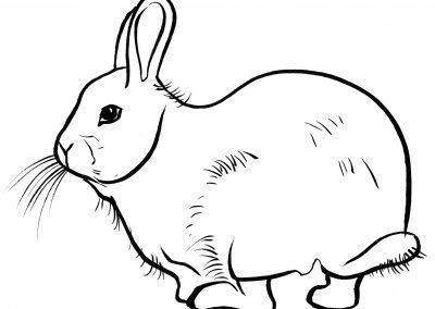 Rabbit106