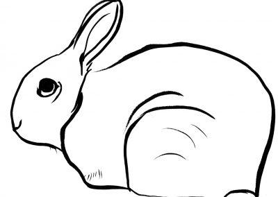 Rabbit109