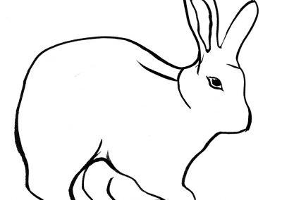 Rabbit110