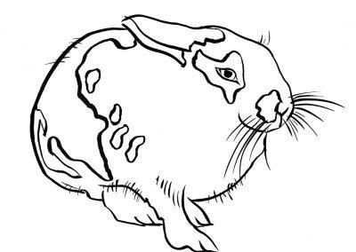 Rabbit111