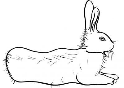 Rabbit112