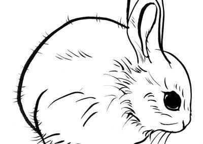Rabbit113