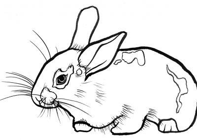 rabbit114