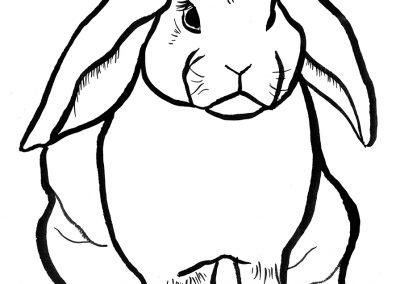 rabbit115