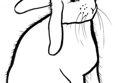 rabbit116